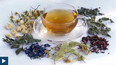 Tee – ein Getränk für alle Lebenslagen